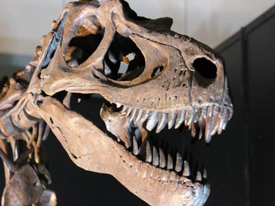 恐竜研究の歴史はまだ浅い