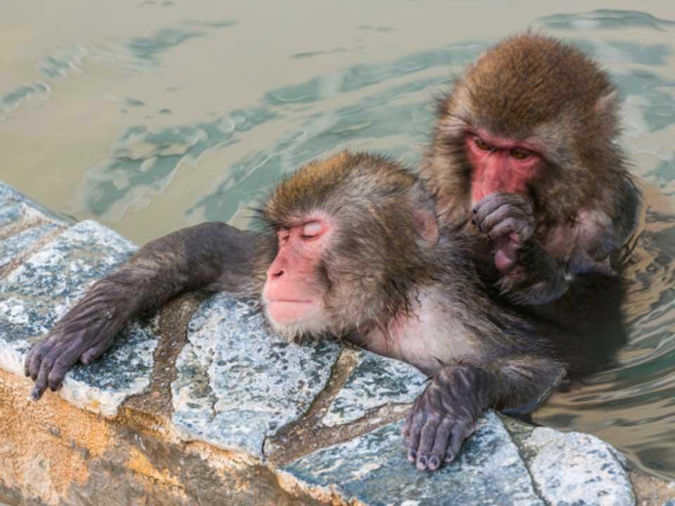 良い風呂の日